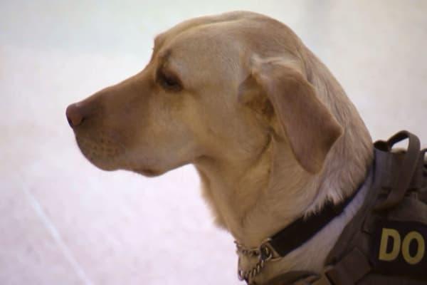 K-9 Unit police dog