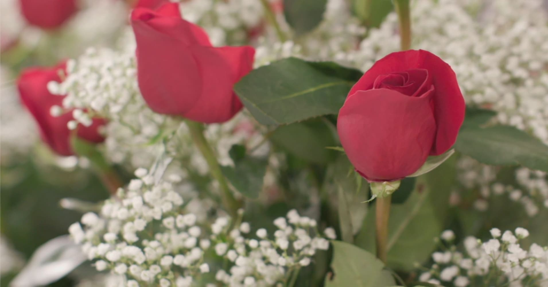 Valentines Day At Trader Rose >> How 1 800 Flowers Com Became The Amazon Of Valentine S Day