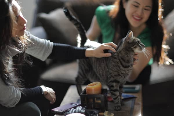 Cat whisperers recognize the superiority of cats to humans.