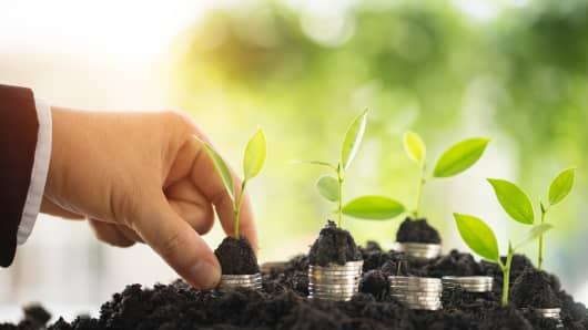 Plant tree growing on businessman hand.business investment financial growth concept ideas