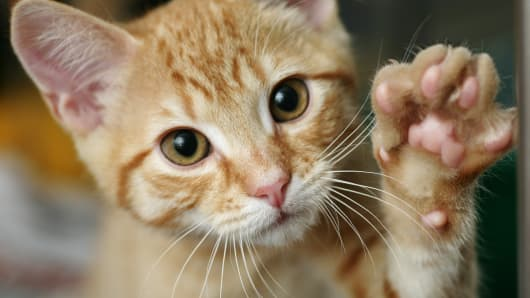 Kitten with his paw up