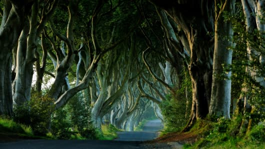 Ireland, Ulster, County Antrim, Ballymoney, Dark Hedges (Kingsroad in the Game of Thrones series).