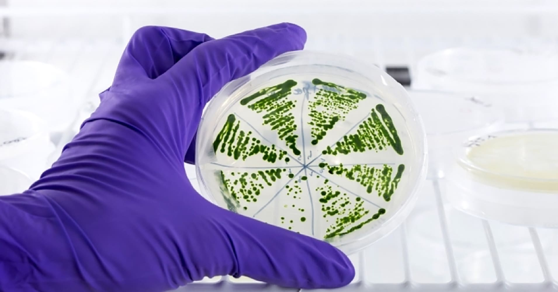 Microalgae, a promising pathway to sustainable biofuels